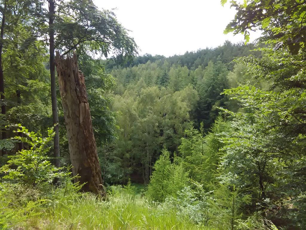 20170605-badfreienwalde-ahrendskehle (6)