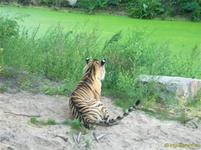 zoo_eberswalde_2008_11